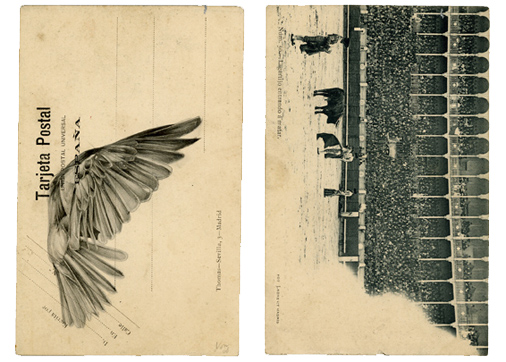 bird_postcard1.jpg